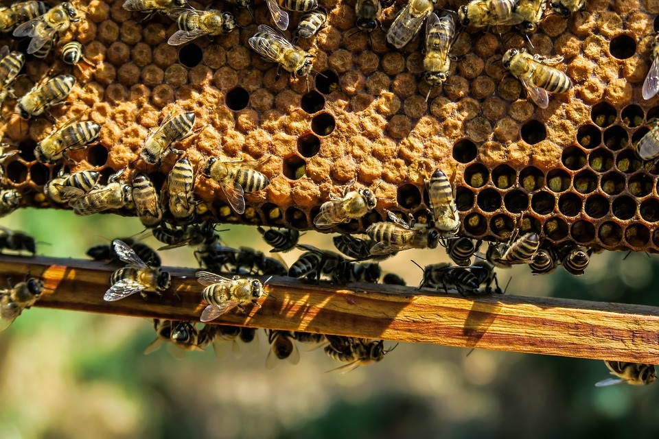 Beekeeping Agriculture Beehive Apiary Beeswax Bee