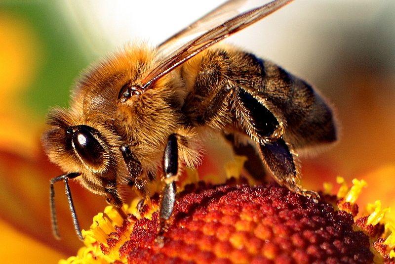 Ziekten van bijen en hoe te voorkomen